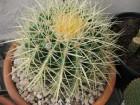 09jan_cactus02