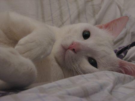 Ops... isso não é fantasia, rsrsrs... é Pipoca, o gato da Carol. Não é LINDO?