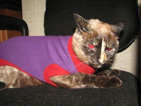 Polly na moda: roxo com detalhes em vermelho.